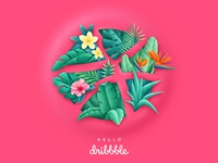 Dribbble tropic