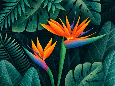 Bird of Paradise Flowers leaves plants tropical jungle floral illustration flowers bird of paradise