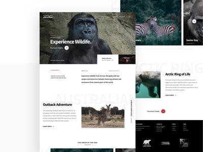 Zoo homepage homepage photography landing zoo web design ui design ux design ui ux landing page