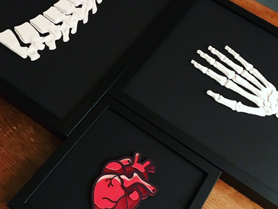 Anatomical Series