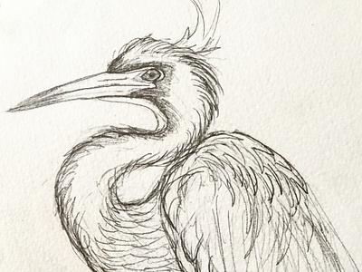 Bird drawing illustration