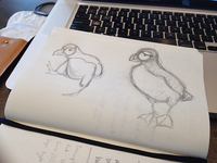 Puffin sketches