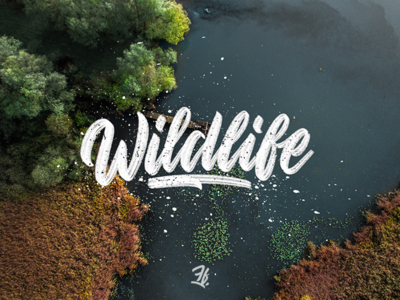 Handlettering Wildlife logotype splash grey watercolor handlettering lettering drone