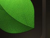 Mint Icon Details