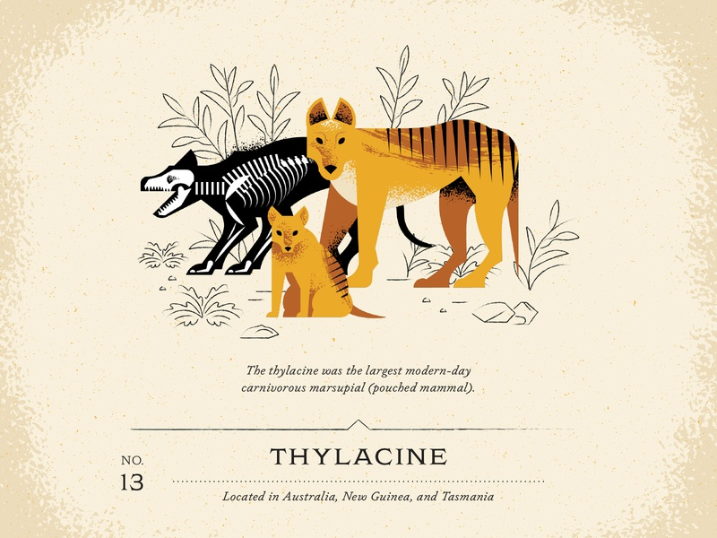 Thylacine vintage design guide leaves leaf texture draw exo animal furry brush fur skeleton bone devil tasmania guinea new australia dog