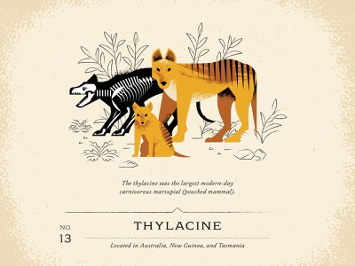 Thylacine vintage design guide leaves leaf texture draw exo animal furry brush fur skeleton bone devil tasmania guinea new australia dog