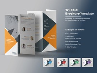 Tri-Fold Brochure