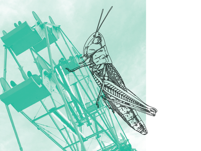 Sneak Peek bug holiday whimsy cricket illustration book