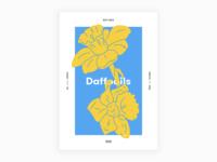 Day 37 - Daffodils