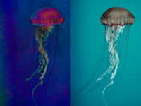 Medusa Poster | Blue Variants