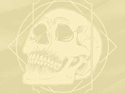 Skull Study illustrator illustration skull