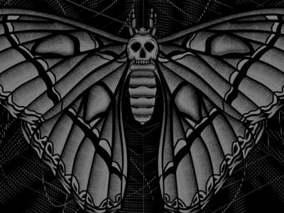 Moth Study stippling illustration skull moth