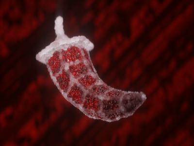 Ruby pepper visual x-particles cinema 4d c4d octane 3d digital art cgi cg event cg logo
