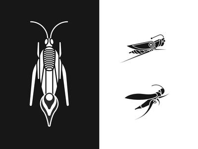 Cricket Symbol Iterations
