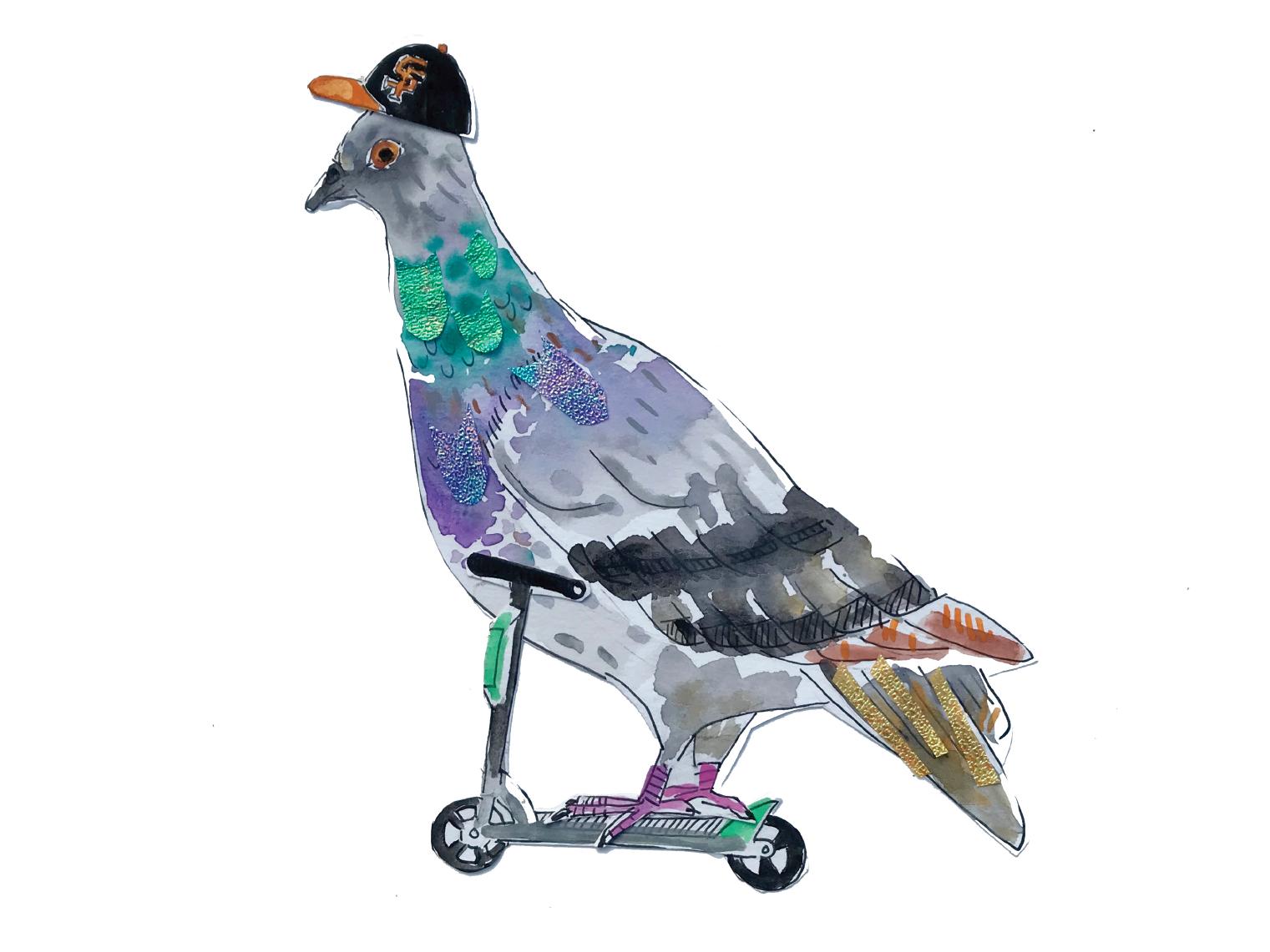 San Francisco Resident (pigeon) by Maria Gabriela Sanchez Mallona on
