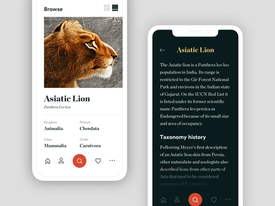 Museum App WIP wiki info app search browse lion museum mobile typography minimal black white clean