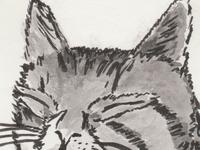 Cat Nap Sketch
