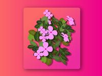 Flowerspink