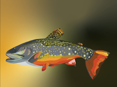 Brown Trout sticker design fly fishing trout graphic design sticker illustration