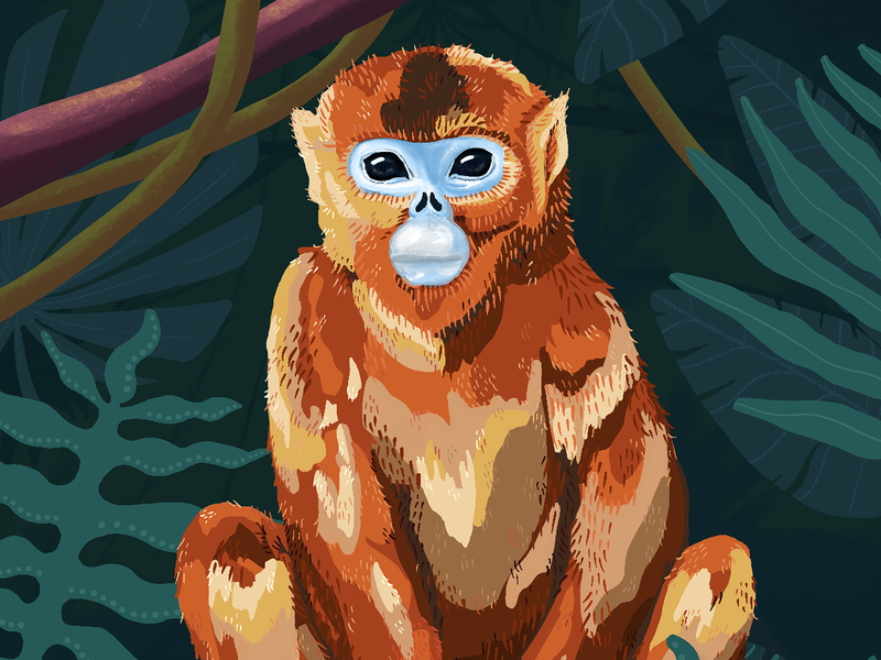 Golden Snub-Nosed Monkey earthday earth earth day tropical green plants animals animal procreate art procreate app procreate endagered nature species endangered species endangeredspecies golden monkey monkey jungle illustration