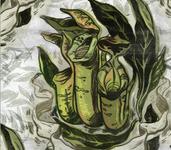 Pitcher Plant Pattern