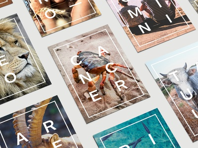 Posters - Star Signs animals print design graphic design design art direction star signs prints posters wallart
