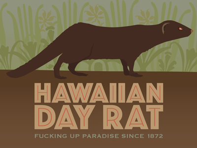 Hawaiian Day Rat rat hawaii mongoose