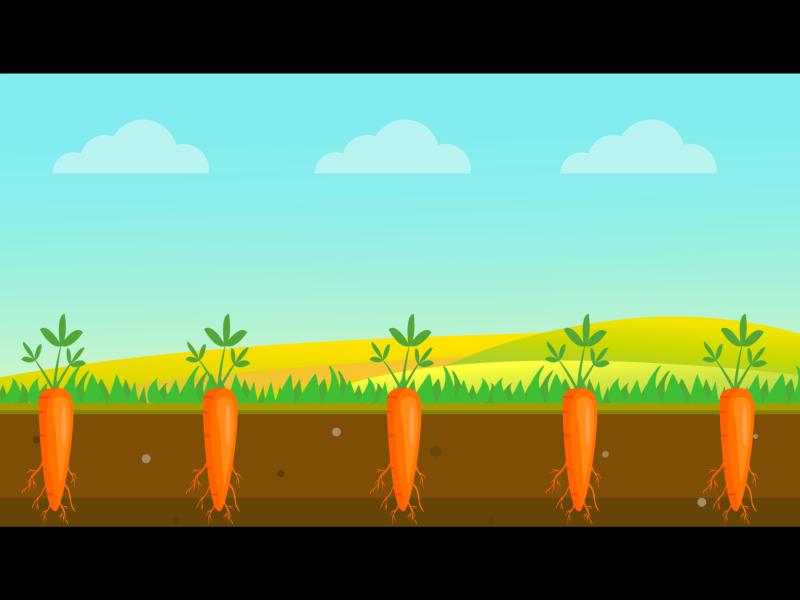 Carrot farm animation vector illustration carrot