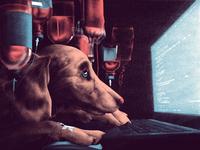 996 work schedule are making us animals