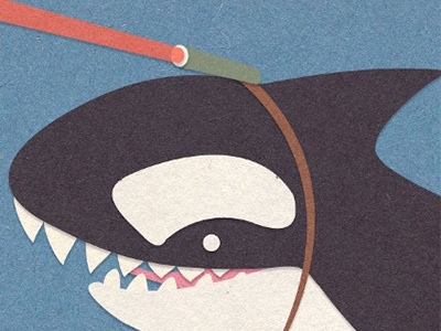 Honorroller Whale 1 Laser