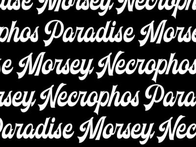 New Vintage Typeface typography classic display custom new vintage font vintage typeface font design font bundle font