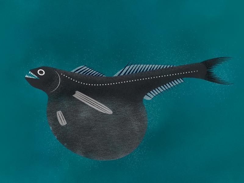Black Swallower texture vector illos deep sea fish ocean illustration