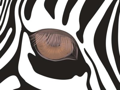 Beauty of Zebra