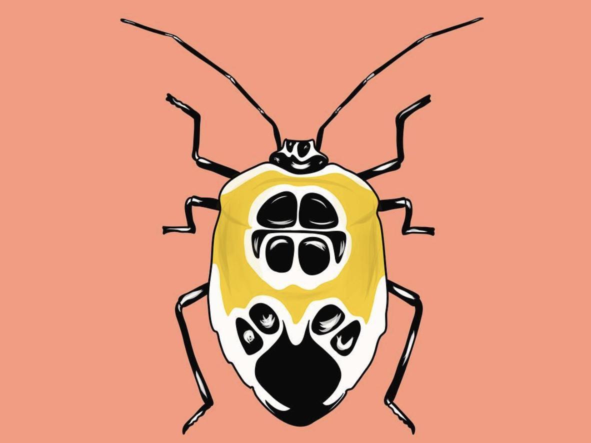Cockroach cockroach insect vector colour procreateapp procreate art minimal clean design illustration