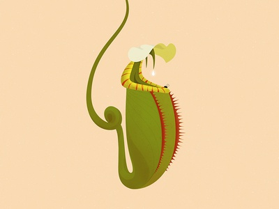 Carnivorous Plants: Nepenthes