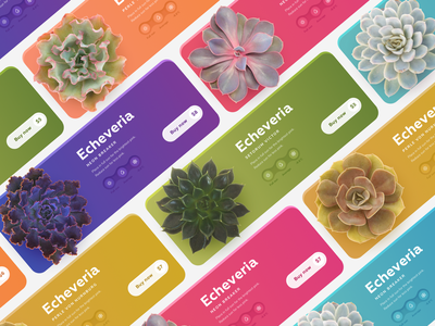 Block with goods for succulents store bright color coloful interaction design ui design ux  ui ux