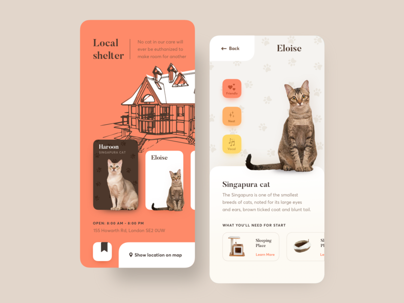 Adopt a cat app web vector ux uiux ui typogaphy sketch mobile minimal design concept clean cat bright color branding