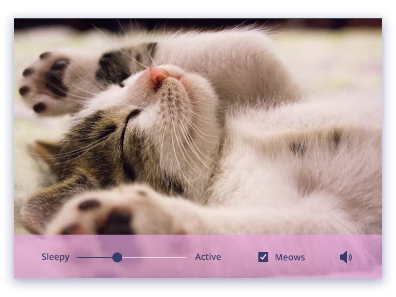 Purrradio daily ui radio purr kitten cat audio settings
