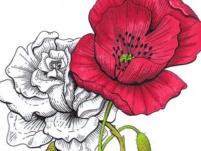 White Rose & Poppy rose flowers illustration poppy ink drawing markers
