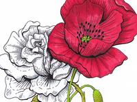 White Rose & Poppy