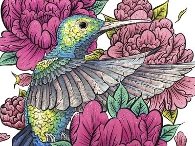 Hummingbird & Peonies peonies flowers hummingbird design birds ink illustration illustration ink drawing