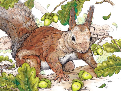 Squirrel Amongst the Oaks animals wildlife acorns squirrel ink illustration illustration ink drawing