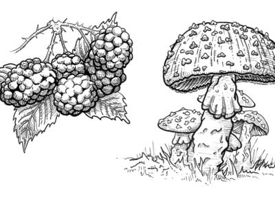 Nature Illustrations for additional brand elements natural history ink drawing ink illustration design illustration