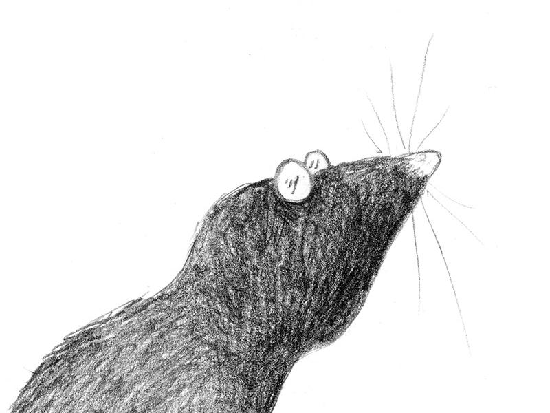 Conrad the mole pencil mole childrens illustration picture book character sketchbook