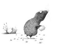 Andrearingli conrad the mole
