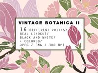 Vintage Botanica II