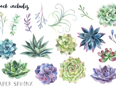 Watercolor Succulents Clipart Free Download By Graphic Assets On Dribbble