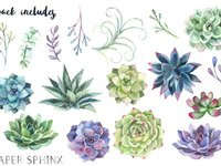 Papersphinx succulents 2