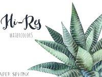 Papersphinx succulents 3