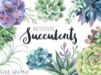 Papersphinx succulents 1